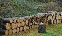 november-16-wood-pile