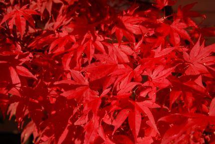 november-4-colors-extreme