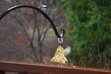 december-27-seed-feeder
