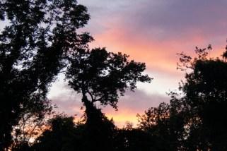 Sony sunset