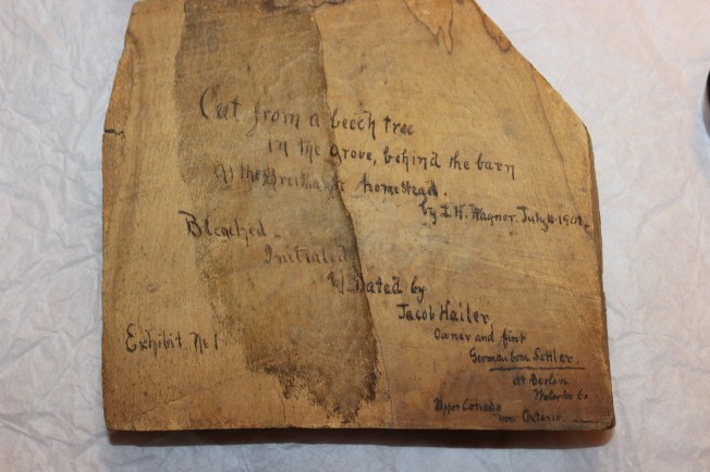 Bleached Beech Tree Segment, inscribed by Louis H. Wagner in 1901