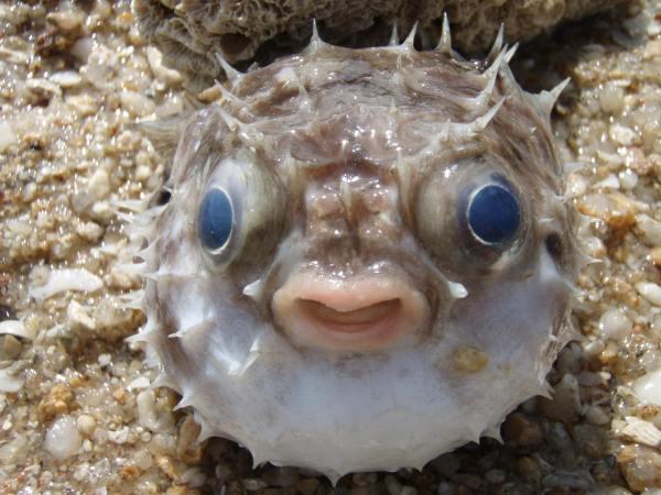 Смешные картинки животных — Выпуск № 10 (Рыбы ...