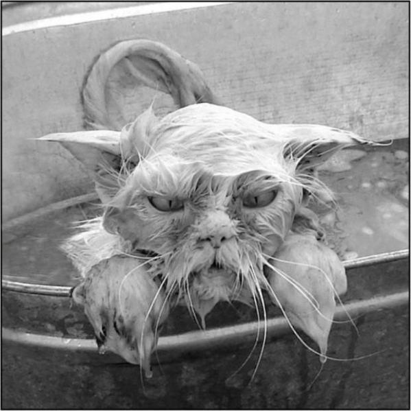 Смешные картинки животных — Выпуск № 20 (Мокрые коты ...