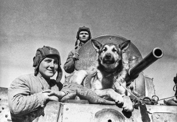 Животные знаменитости. Часть 5. Собаки – герои Великой ...