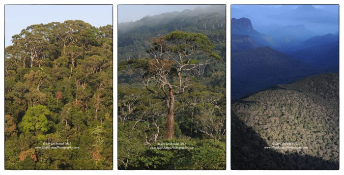 Three types of forest from Sri Lanka's Central Highlands: lowland rainforest, montane forest and cloud forest.