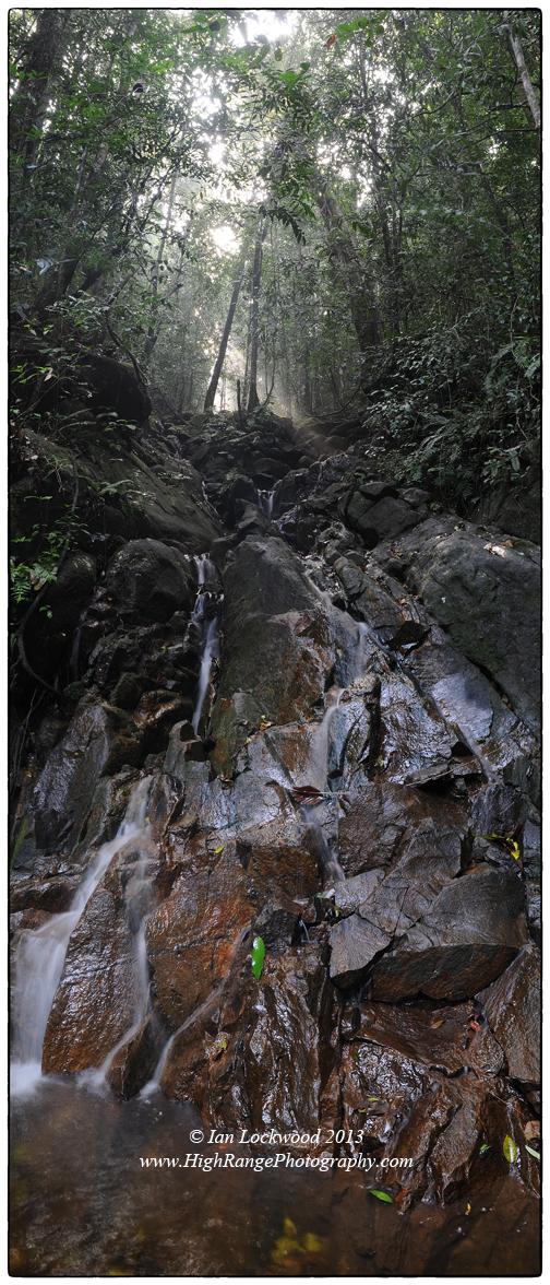 Stream at sunrise, Sinharaja