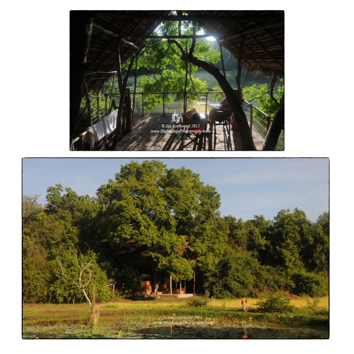 Back of Beyond's inimitable treehouse bungalow near Sigiriya. This was our first stop over on the way to Jaffna.