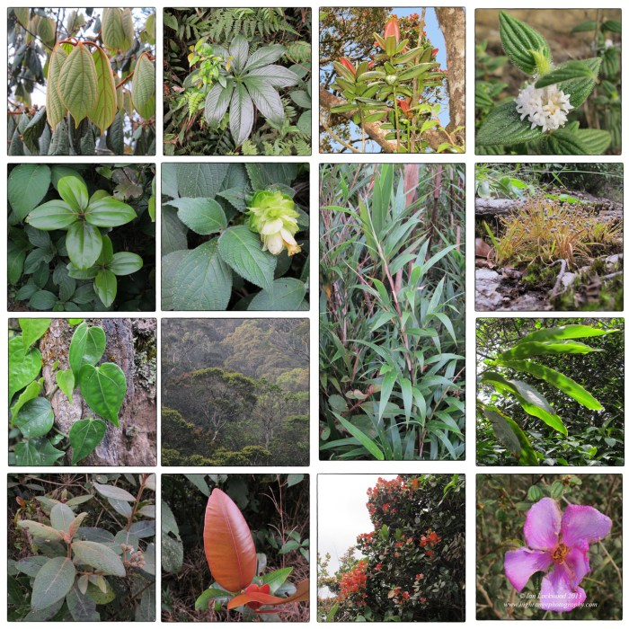 Collage of native flora on the forest trail to Sri Pada's 2,243 meter summit.