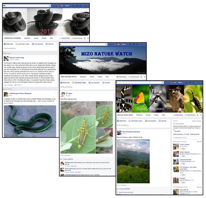 College of selected Mizo snake and wildlife social media pages.