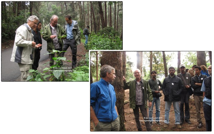 A visit to observe plantations and shola revival in them on the road form Kodai to Poombari.