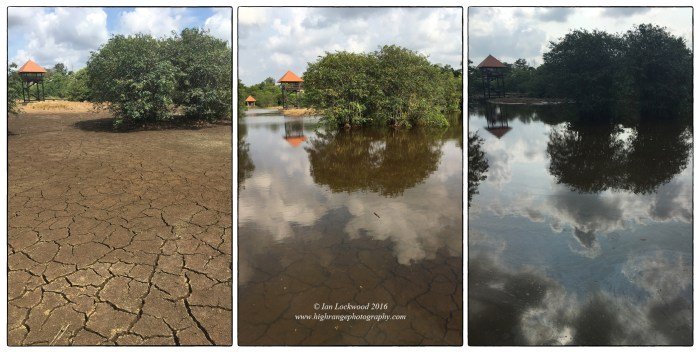 Dry & wet conditions over the course of a week at Beddagana Wetlands Park. The dry spell in September and early October was unusual and normally there is water in this part of the park.