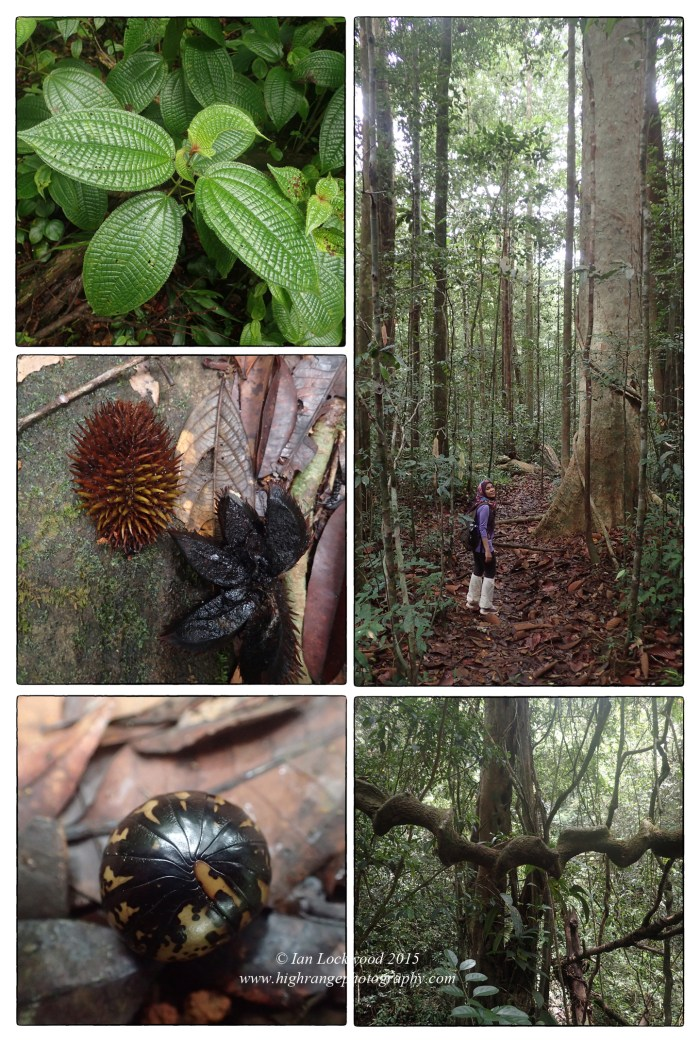 Miscellaneous snapshots from the Sinharaja rainforest area.
