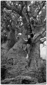 OTG members climbing one of Mannar's baobab trees.