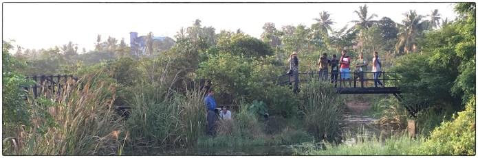 "Awaiting the ""cat walk"" of the Ruddy-breasted crake at Thalawathugoda (Diyasaru) Biodiversity Park."