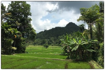Paddy surrounded by mixed forests and home gardens.(May 2017).