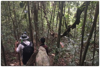 Taking a walk through the rainforest at the beginning of the study.