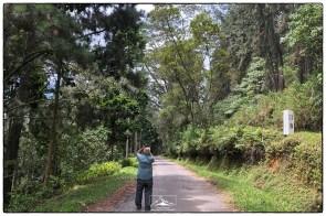 Professor Nimal Gunatilleke documents efforts to restore a Pinus plantation on the road up from Rakwana to Suriyakanda.