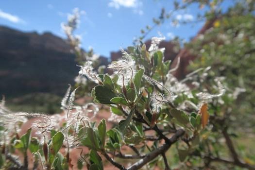 Flora of Sedona, AZ