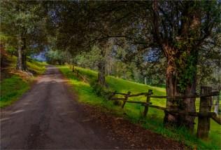 beefsteak-road-2016ni-007-17x25