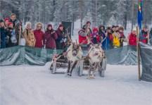 jokkmokk-reindeer-racing-2017-swe464-18x26