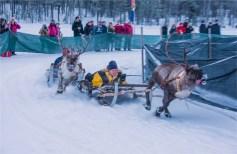 reindeer-racing-jokkmokk-2017-swe007-17x26