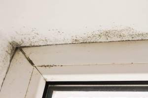 prevent mold growth