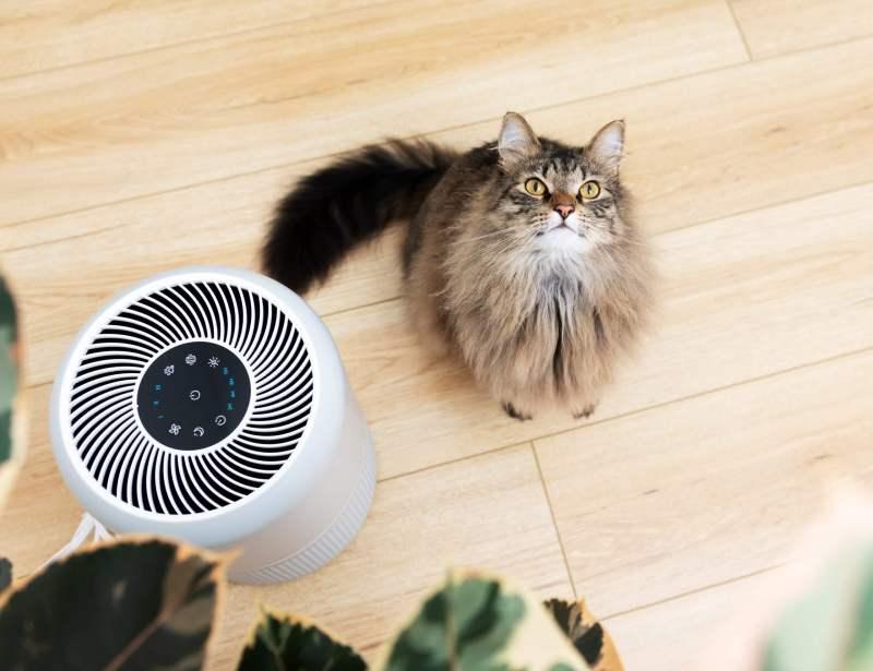air purifier working