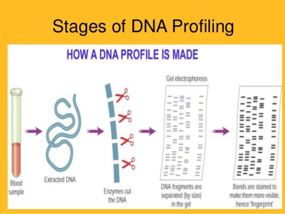 DNA profiling bill - IAS UPSC preparation iasexpress.net