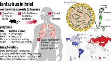 Photo of Amid Coronavirus New Hantavirus Take 1 life in China