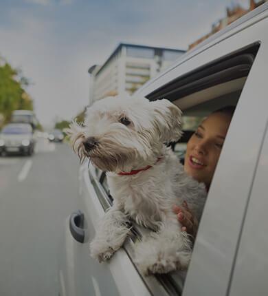 car-insurance-providers-st-louis- IASTL