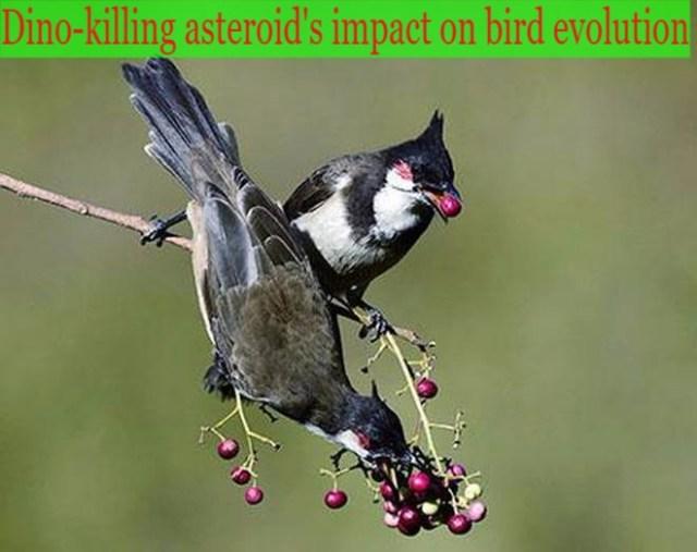 Dinosaur killing asteroid impact (1)