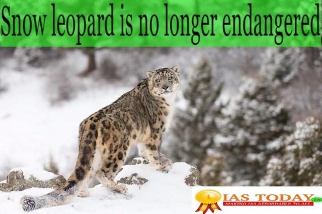 Snow-leopard -endangered