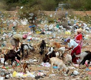plastic waste on deers