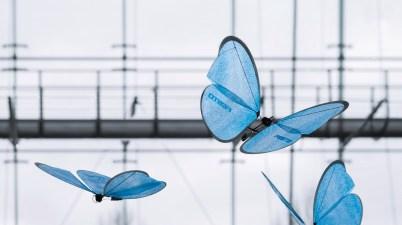 papillons bioniques