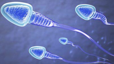 sperme artificiel