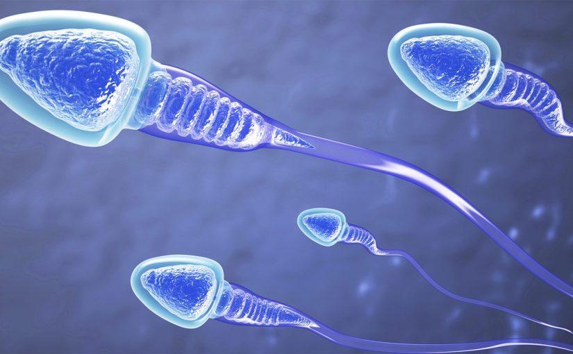 Chine :  production de sperme artificiel