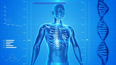 human-skeleton-squelette humain le corps humain anatomie x ray adn