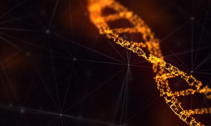 DNA molecule adn