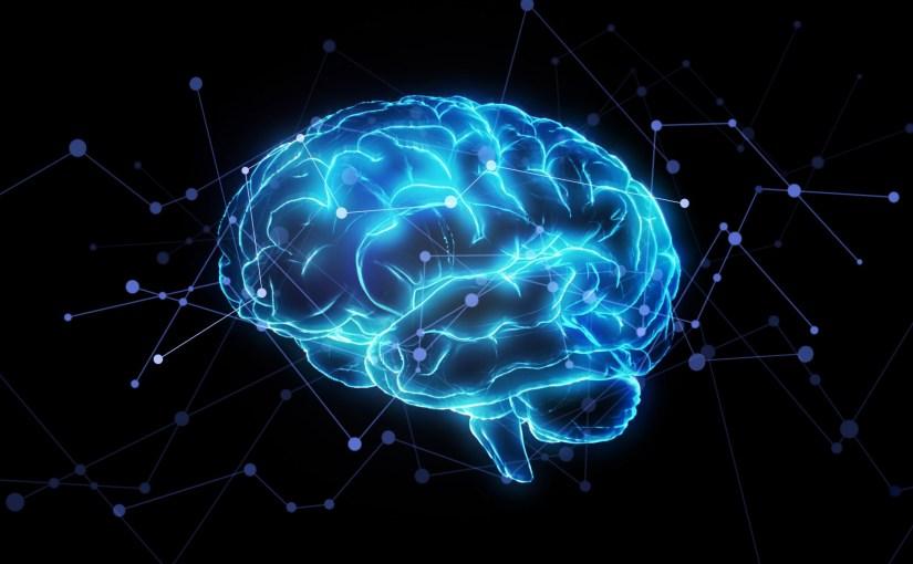 cerveau brain