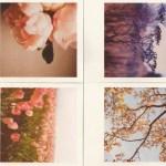 25+1 τραγούδια με λουλούδια