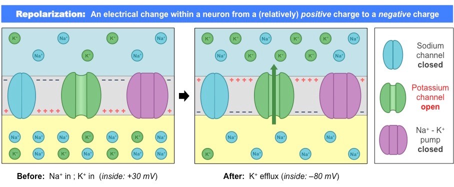 Simple Neuron Refractory Period