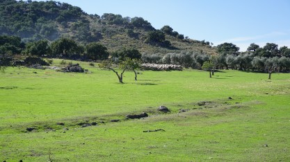Las ovejas preparadas para un día de Sol