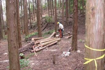 モニタリング内での間伐作業