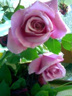 09-04-24rosa-santjordideisa