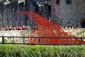 November - Poppies at the Tower