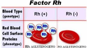 Como se hereda el Factor Rh?