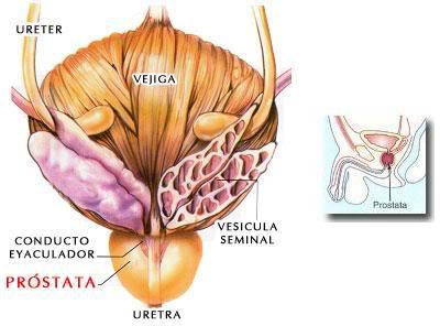 Imagen: La próstata