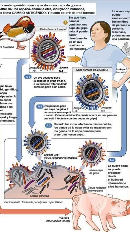 Proceso de un virus