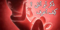 الفرق بين نمو الجنين الذكر والأنثى