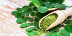 فوائد وأضرار عشبة المورينجا